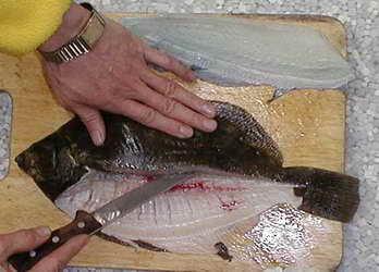 Pisi balığı nasıl ayıklanır(resimli anlatım)